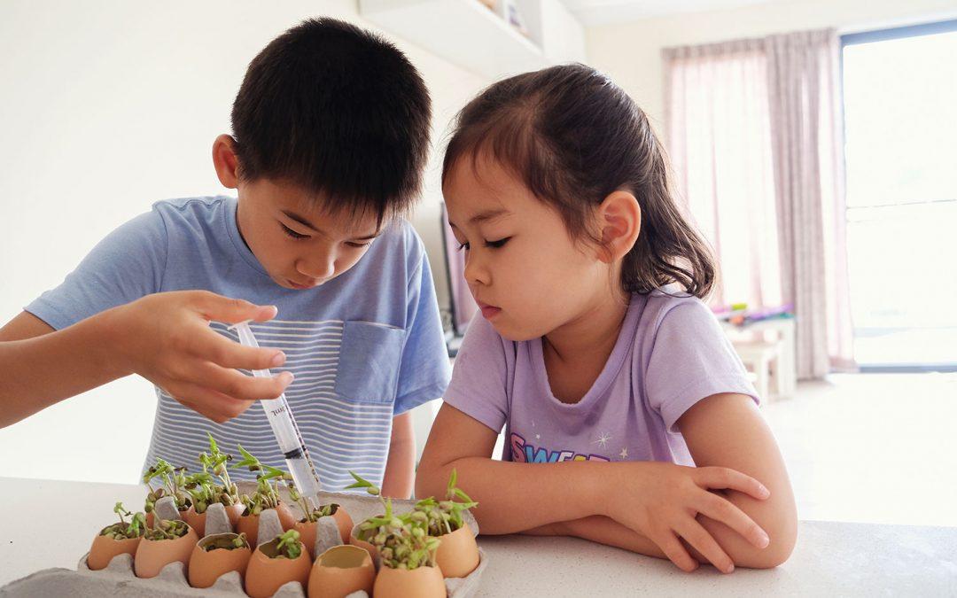 Chores at Home- A Montessori Approach